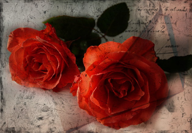 Roses-of-Red-HP